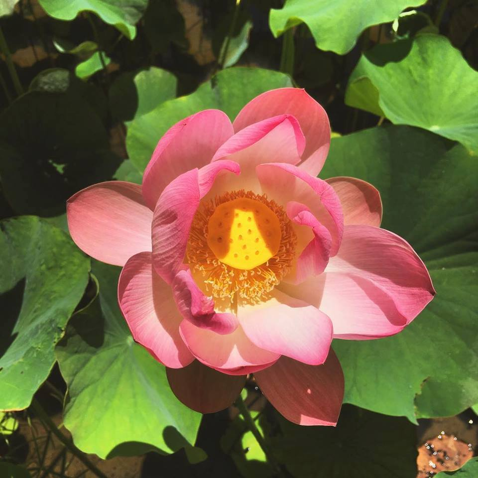 Lotus Upgrade – our 1st online course launches tomorrow!